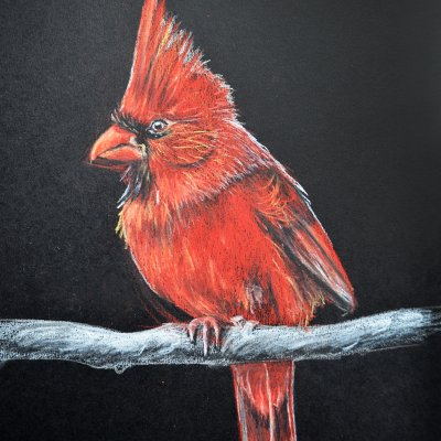 The Extinct Red Cardinal