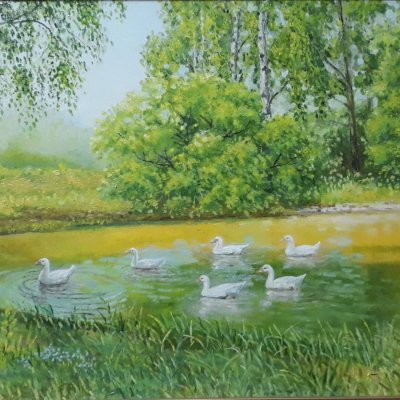 Geese on a pond near the village of Merch