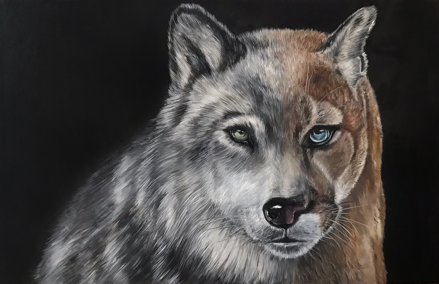Portrait of a wolfus and cougar