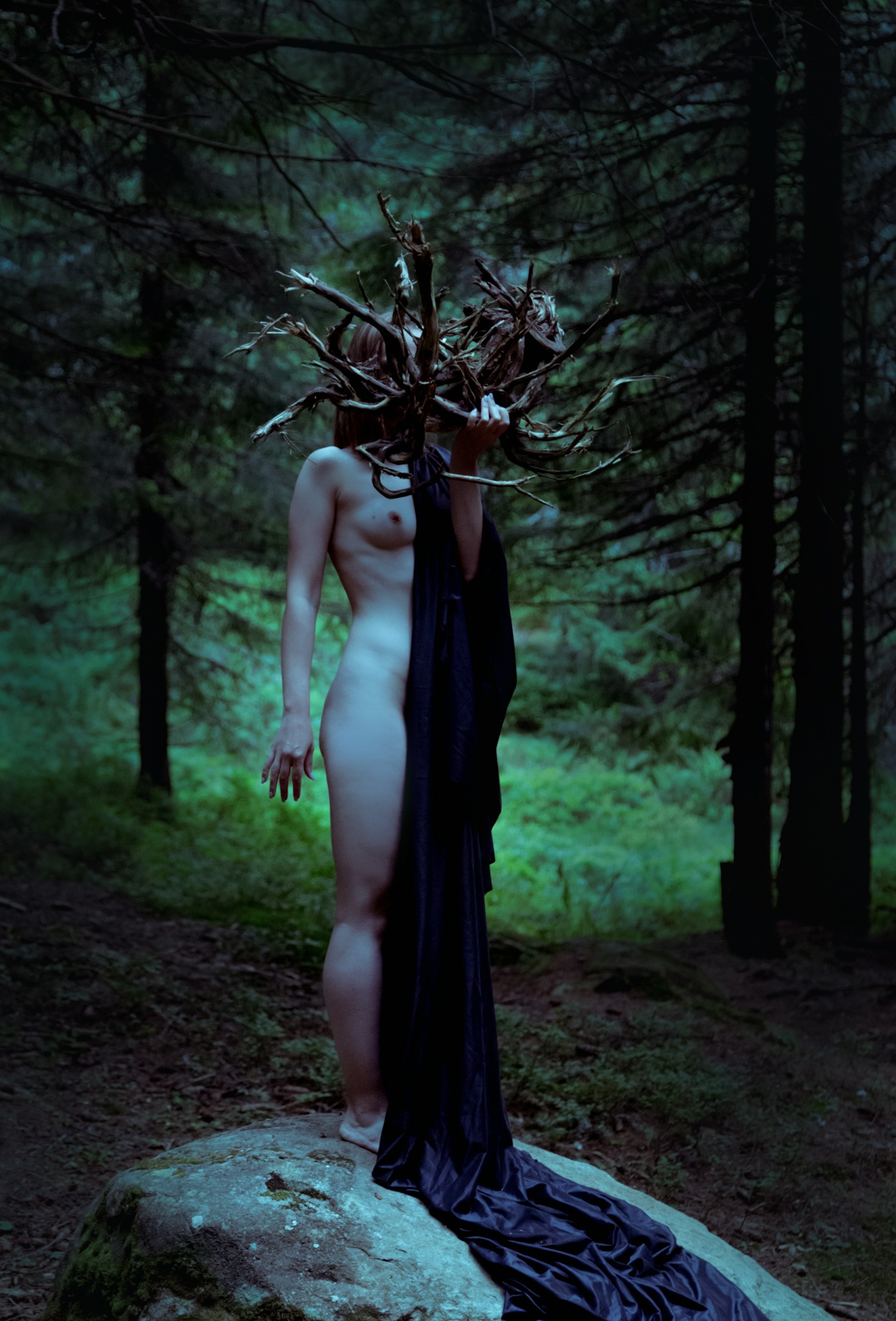 The soul of forest