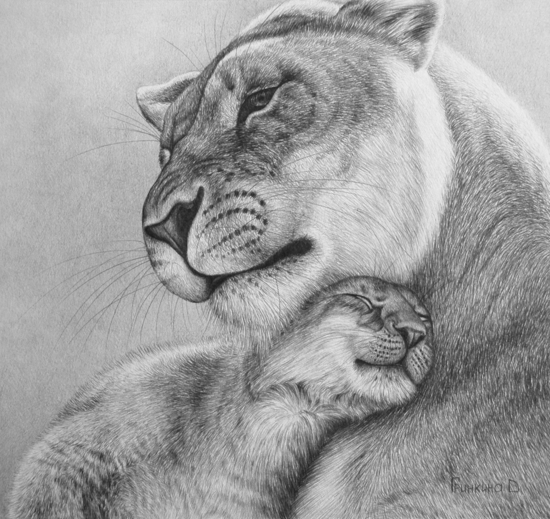 Lioness with lioness